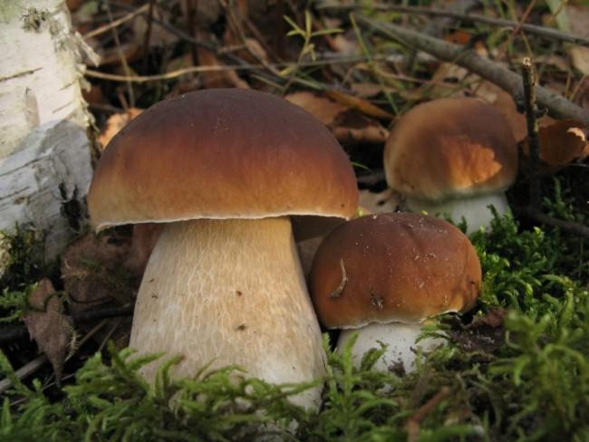 Можно ли есть грибы при беременности