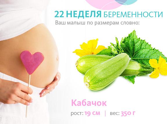 Беременность 22 недели