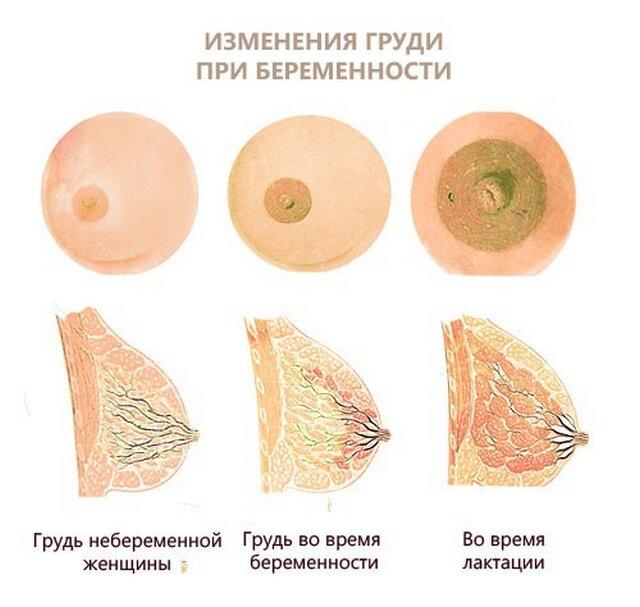 Беременность 24 недели