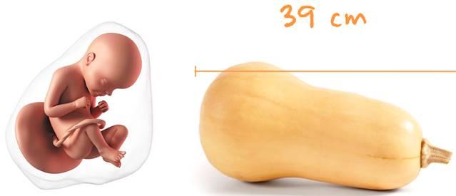 Беременность 29 недель